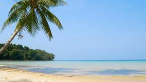 4K του τοπίου της τροπικής θάλασσας με το φύλλο φοινίκων καρύδων φυσήξτε στον αέρα, την άσπρα παραλία άμμου και το κρύσταλλο - σα απόθεμα βίντεο