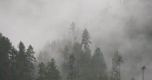4k υδρονέφωση βουνών που αυξάνεται το πρωί, δέντρα πεύκων ομίχλης, κομητεία Bomi στο Θιβέτ απόθεμα βίντεο