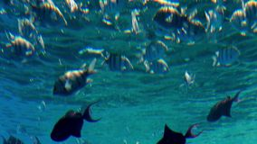 4k υποβρύχιο μήκος σε πόδηα των όμορφων ψαριών που κολυμπούν στη θάλασσα Καταπληκτικό seascape και ocan ζωή απόθεμα βίντεο