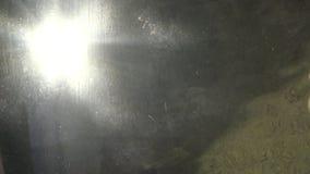 4K υπόβαθρο φωτός του ήλιου υποβρύχιο, κυπρίνος και άλλα ψάρια που κολυμπούν στο ενυδρείο απόθεμα βίντεο