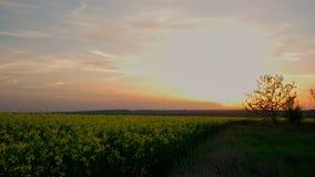 4k χρονικό σφάλμα ενός όμορφου ηλιοβασιλέματος πέρα από έναν τομέα του συναπόσπορου απόθεμα βίντεο