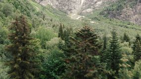 4k - полет вертолета над верхними частями елей в горах Кавказ сток-видео