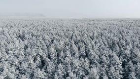4K Полет над лесом зимы на северном, воздушном взгляд сверху сток-видео
