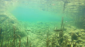 4K Подводный взгляд одичалых рыб форели заплывания Озеро Bohinj, Джулиан Альпы, национальный парк Triglav, Словения акции видеоматериалы