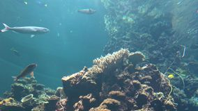4K, различный вид взгляда рыб подводного кораллового рифа в аквариуме видеоматериал