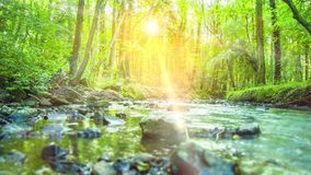 4K - 使跟踪流经一个沈默,农村绿色热带森林的镇静河射击光滑