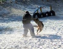 k9叮咬衣服的驯狗师在行动 在操场的训练课一条德国牧羊犬狗的 狗` s攻击 库存图片