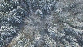 4K 在多雪的冬天森林上的低飞行北部,鸟瞰图的 影视素材
