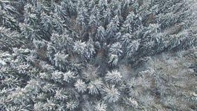 4K 在多雪的冬天森林上的飞行北部,鸟瞰图的 股票录像