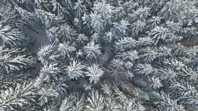 4K 在多雪的冬天森林上的飞行北部,鸟瞰图的 影视素材