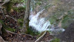 4K 在树的根的之间小河水流量在Plitvice湖 影视素材