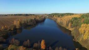 4K 在湖和森林的飞行在金黄秋天,鸟瞰图 影视素材