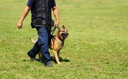 K9有他的狗的警察 免版税图库摄影