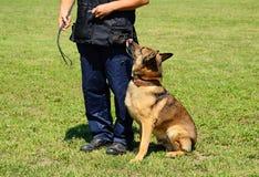 K9有他的狗的警察 免版税库存照片