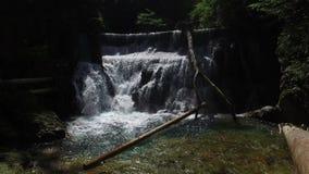 4K 瀑布看法在Radovna河的Vintgar峡谷 清洗大海和木日志 特里格拉夫峰国家公园,朱利安阿尔卑斯山 影视素材