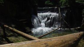 4K 瀑布看法在Radovna河的Vintgar峡谷 清洗大海和木日志 特里格拉夫峰国家公园,朱利安阿尔卑斯山 股票录像