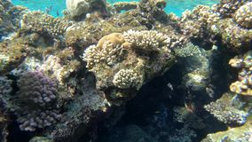 4k - 美丽的珊瑚礁在有很多惊人的鱼的红海 股票录像