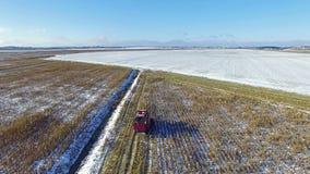 4K 联合收割机在麦地运转在第一雪以后!收割机切成熟干玉米 空中全景 股票视频