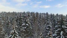 4K 飞行和起飞在多雪的冬天森林上北部,鸟瞰图的 影视素材
