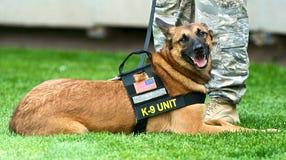 K-9 hond Stock Foto's