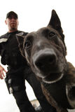 K-9 unit. An officer with his police canine Royalty Free Stock Images