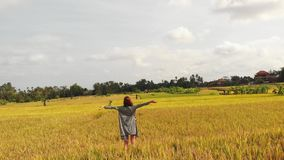 Aerial photo of woman standing on yellow rice field on Bali island. Drone photo of woman standing on yellow rice field on Bali island. Indonesia stock photos