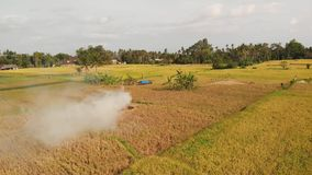 Aerial drone photo of yellow rice field on Bali island. Drone photo of yellow rice field on Bali island. Indonesia royalty free stock photo