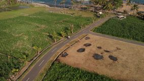 4K aerial drone footage of young couple tourists riding motorbike scooter at sunset time. Bali island. Indonesia stock footage