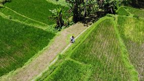 4K Aerial drone shot of couple launching drone on rice paddy terrace fields on Bali island. Indonesia stock video