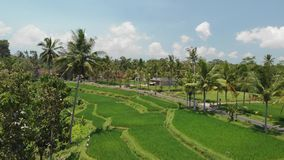 4K aerial flying video of green grass background and coconut palms. Bali island. 4K aerial flying video of green grass background and palms. Bali island royalty free stock images