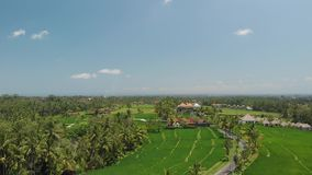 4K aerial flying video of green grass background, palms and road with cars and scooters. Bali island. 4K aerial flying video of green grass background and palms royalty free stock photos