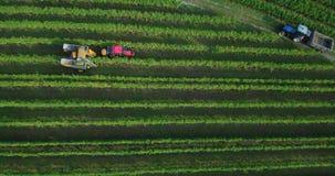 4k Aerial footage of machine grape harvest in vineyard stock video