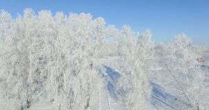 4K Aerial: morning in a winter forest.. Frozen Birch tree with frost at winter field and blue sky stock footage