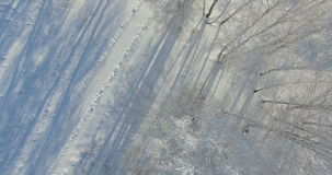 4K Aerial: morning in a winter forest.. Frozen Birch tree with frost at winter field and blue sky. Vertical down view. stock video
