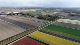 4k aerial video of intercity train driving through dutch agricultural landscape with colorful tulip fields in spring. 4k aerial video of a double deck intercity stock footage