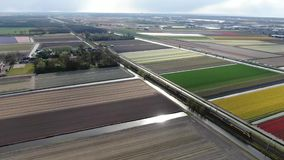 4k aerial video of intercity train driving through dutch agricultural landscape with colorful tulip fields in spring. 4k aerial video of a double deck intercity stock video footage