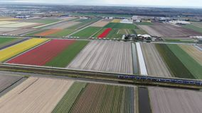 4k aerial video of sprinter train driving through dutch agricultural landscape with colorful tulip fields in spring. 4k aerial video of a sprinter train driving stock footage