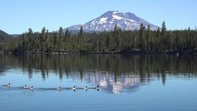4k aerial view on calm river lake water with ducks in Oregon Cascades mountain range covered in deep green forest snow stock video footage