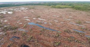 4K aerial view. flight over tourist path on swamps stock footage