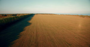4k aerial view. Low flight over green and yellow wheat rural field. stock video footage