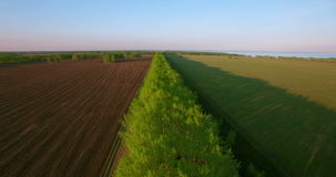 4k aerial view. Low flight over green and yellow wheat rural field. stock footage