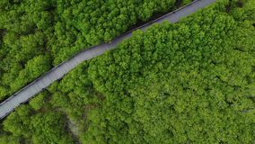 4k aerial View of mangrove forest in pranburi national park. Prachuap khiri khan province, Thailand stock video