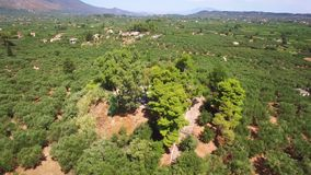 4K Aerial view of olive tree field in Zakynthos Zante island, in Greece. 4K Aerial view of olive tree field in Zakynthos Zante island in Greece stock footage