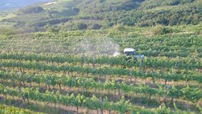 4k Aerial view of tractor spraying vines in vineyard on early summer morning