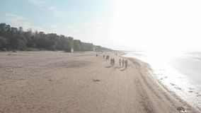 4k aerial view of young people walking along the beach near Baltic Sea in Jurmala stock video