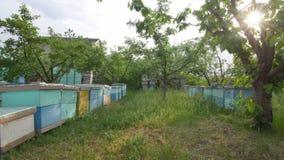 4K algemeen plan van de bijenkorven die zich in het midden van het gebied bevinden stock footage