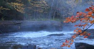 4K Algonquin UltraHD ορμητικά σημεία ποταμού ποταμών στα όμορφα χρώματα πτώσης απόθεμα βίντεο