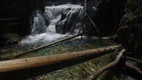 4K Ansicht des Wasserfalls in Vintgar-Schlucht auf Radovna-Fluss Säubern Sie blaues Wasser und hölzerne Klotz Nationalpark Trigla stock video
