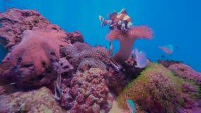 4K Aquarium Background Video. Tropical fish aquarium background video stock video