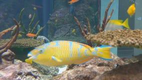 4K Aquarium Background Video. Tropical fish aquarium background video stock footage